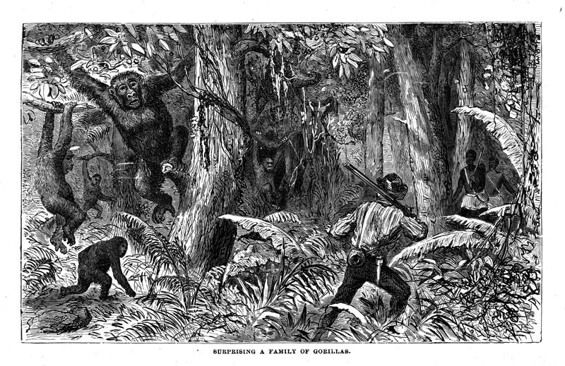 Du Chaillu et une famille de gorilles